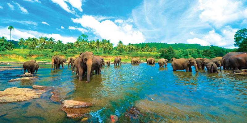Sri Lanka o destinatie cu atractii tentante
