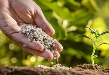 Beneficiile ingrasamintelor asupra plantelor