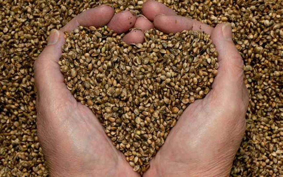 Ce beneficii au semintele de canepa?