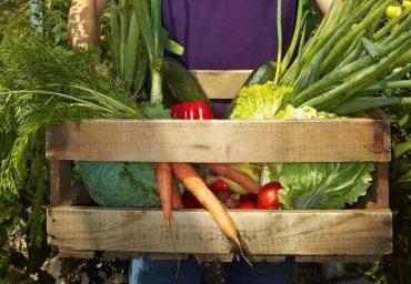 Avantajele consumului de legume cultivate acasa